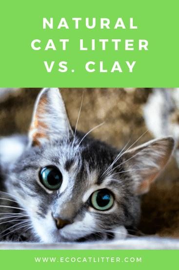 Natural Cat Litter Vs. Clay