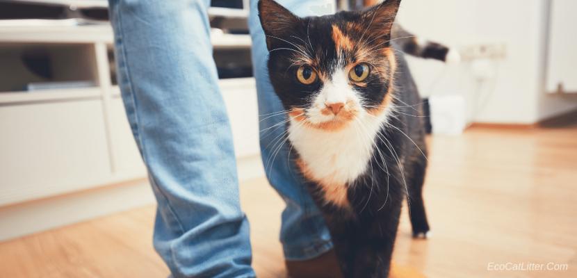 Natural Clumping Cat Litter