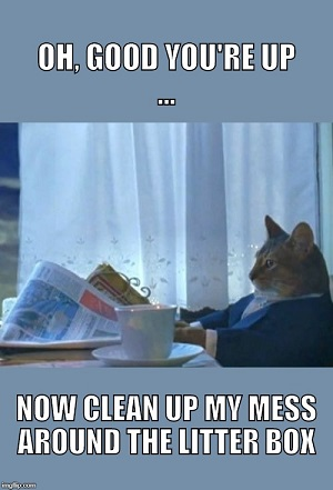 Cat litter meme
