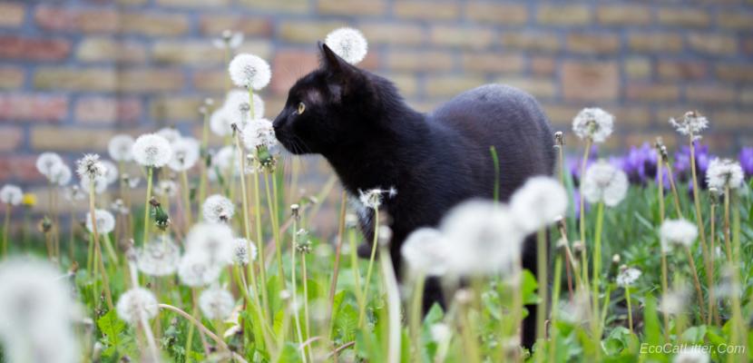Grass cat litter - Cat and grass