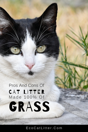 Pros and cons of cat litter made 100% of grass