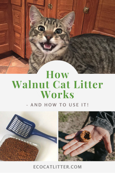 How walnut cat litter works - Photo of cat and cat litter made of walnut shells